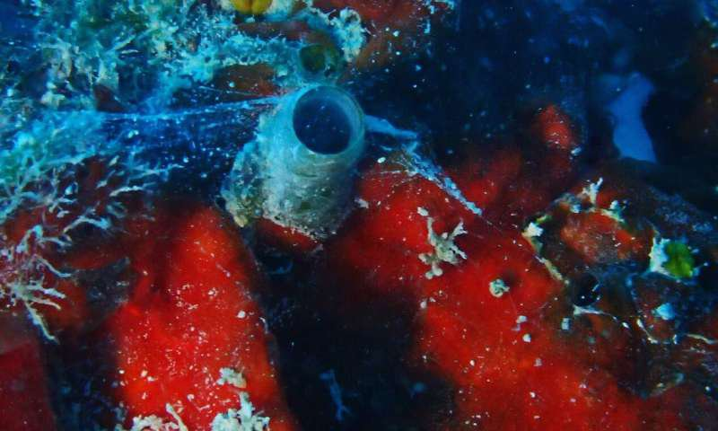 Worm Snail.jpg