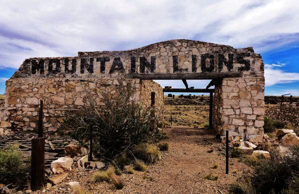 Mountain Lions thumbnail