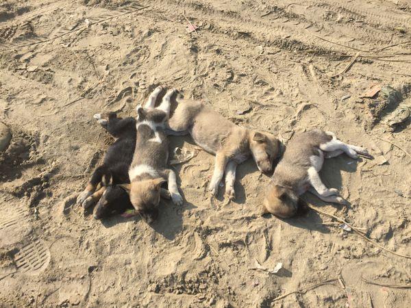 Dogs taking a sunbath thumbnail