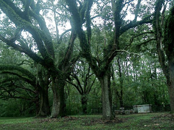 Natchez Trace Graveyard thumbnail