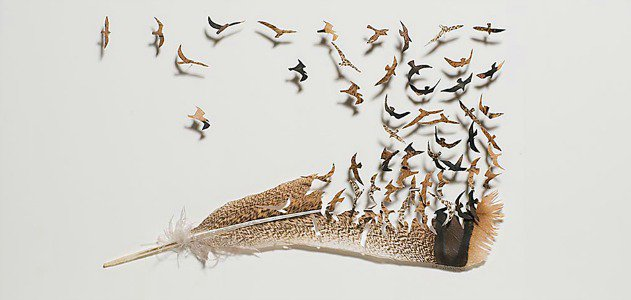 Beautiful Artwork Cut Out of Feathers