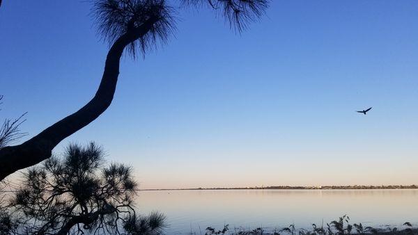 Taking flight over Tuggerah Lake, Australia thumbnail