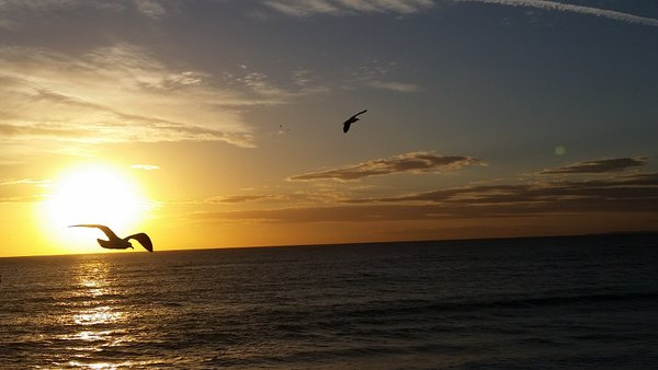 A photo of a seagull flying in front of a sunset over the Pacific Ocean from the Santa Monica, California pier thumbnail