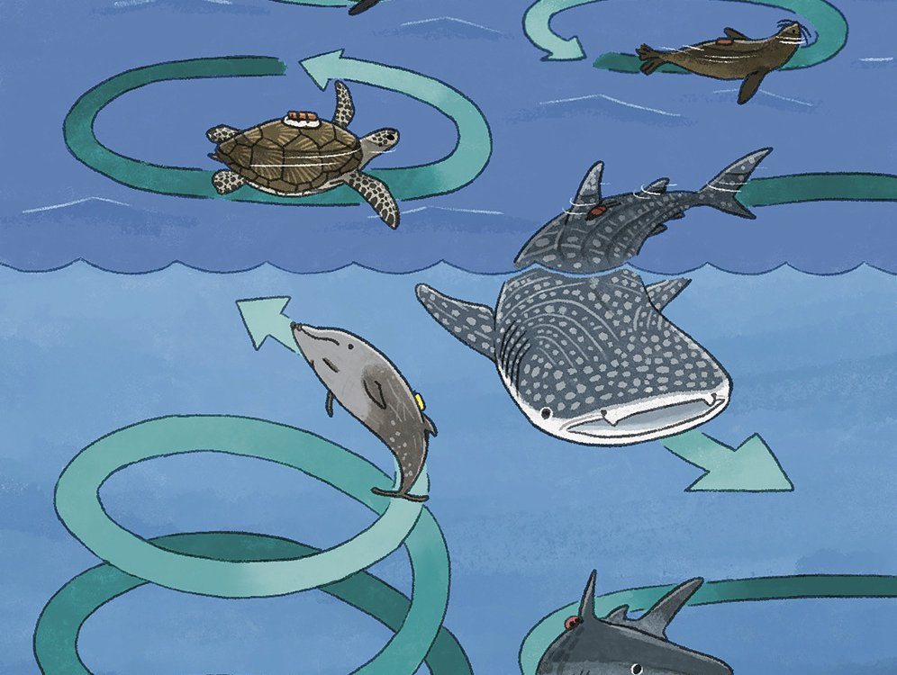 An illustration of various sea creatures swimming in circles. There are arrows illustrating how they would swim in circles