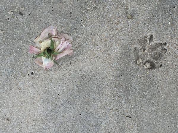Rose paws thumbnail