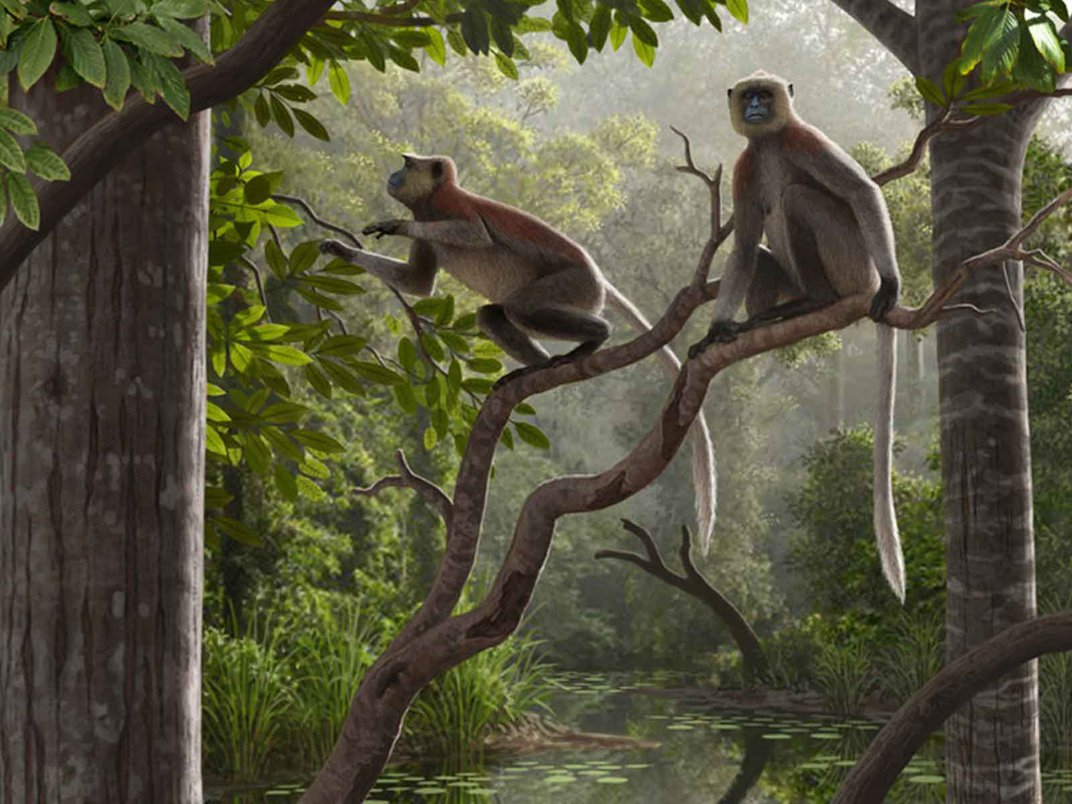 Ten New Things We Learned About Human Origins in 2020
