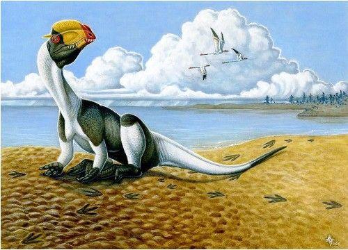 20110520083120dilophosaurus-dinosaur-track-utah.jpg