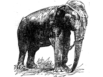 An illustration of Topsy from the St. Paul Globe on June 16, 1902.