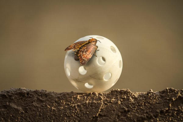 Moth Ball thumbnail