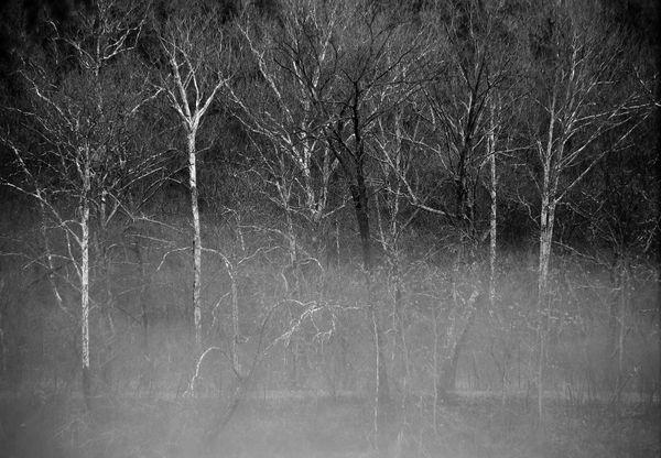 Winter Trees at C&O Canal, Big Slack Water Potomac River thumbnail