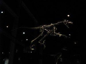 20110520083204saurornitholestes-skeleton-300x225.jpg