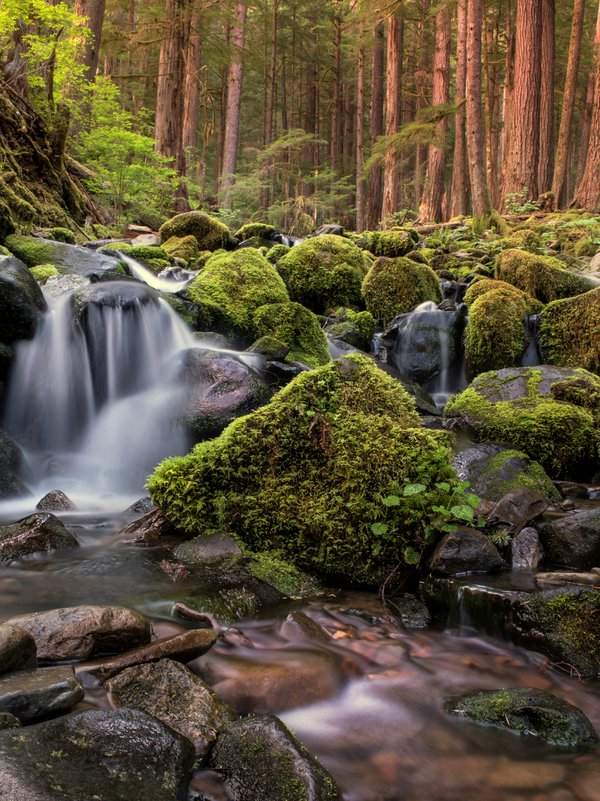 Waterfall in the forest thumbnail