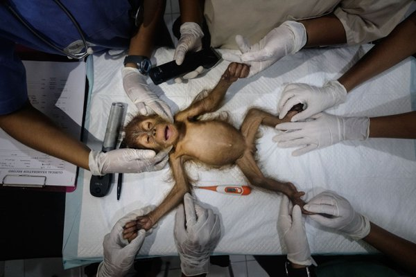 Saving Orangutans 13 thumbnail