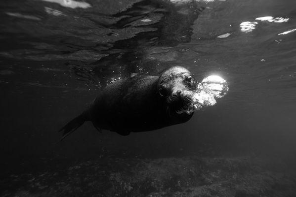 Sea lion portrait in Galapagos/2 thumbnail