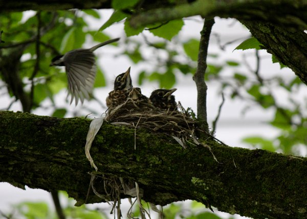 Chickadee Photo Bomb thumbnail