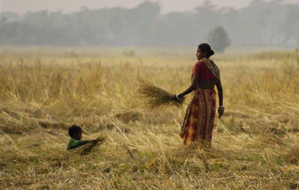 A female farmer in her paddy field thumbnail