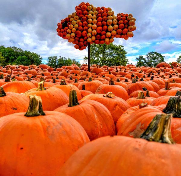 Pumpkin sea thumbnail