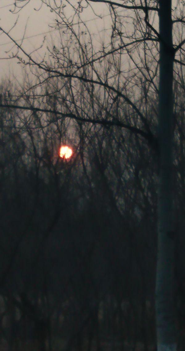 树枝中的夕阳 thumbnail