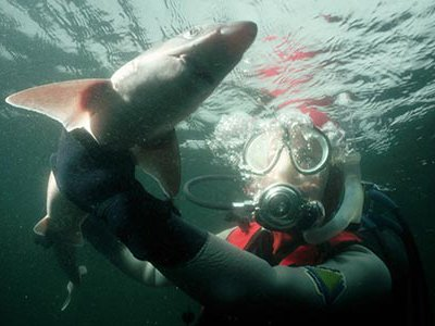There are 50 to 70 reported shark attacks on humans each year, according to the Florida Museum of Natural History.