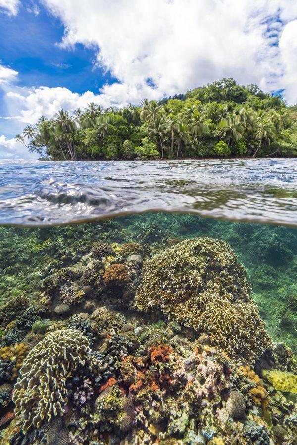 Jungles of Papua New Guinea thumbnail
