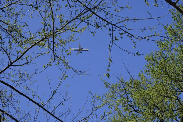 An Airplane in The Forest thumbnail