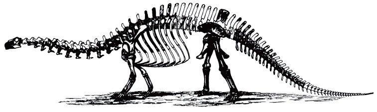 20110520083311brontosaurus.jpg