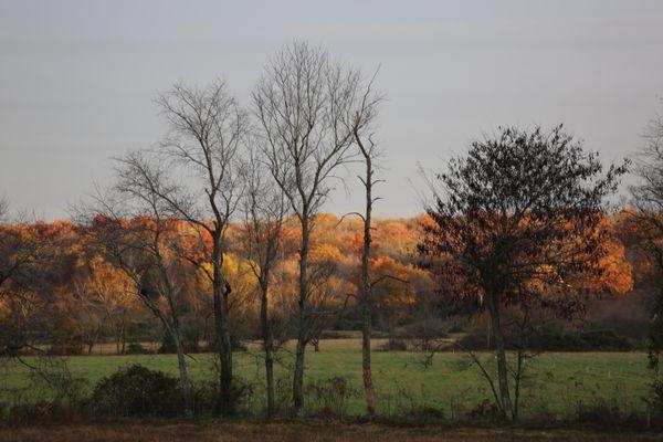 Autumn Canopy thumbnail