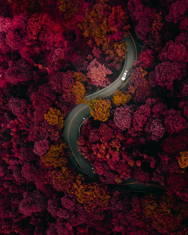 Curvy road in Dark forest thumbnail