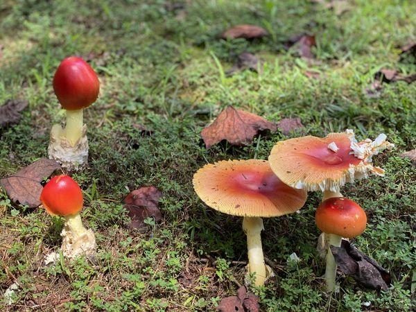 Colorful Mushrooms thumbnail