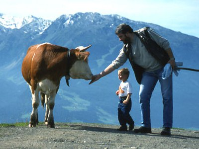 In the Alps, you'll share the trail with cows.