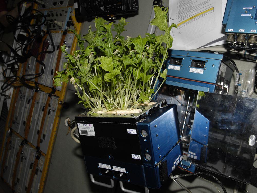 05_08_2014_space lettuce.jpg