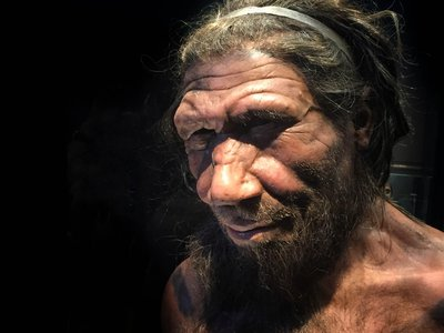 Though the differences between Neanderthals and Homo sapiens may seem pronounced, scientists didn't always embrace the idea that humans evolved from other species.