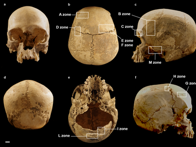 Some of the marks seen on the woman's skull predated her death, while others were likely left by natural forces following her burial.