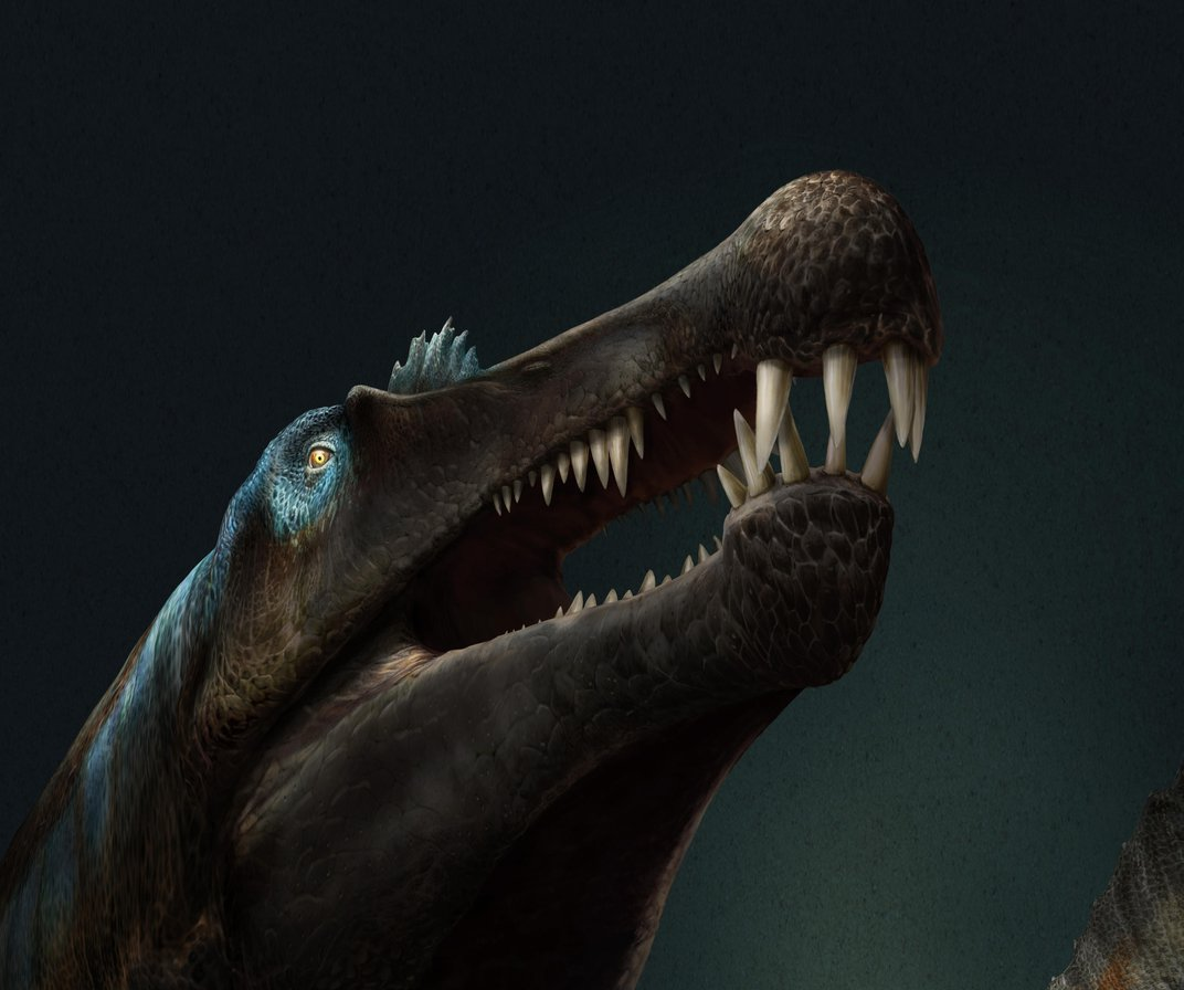 Groundbreaking Fossil Suggests Spinosaurus Is First Known Swimming Dinosaur