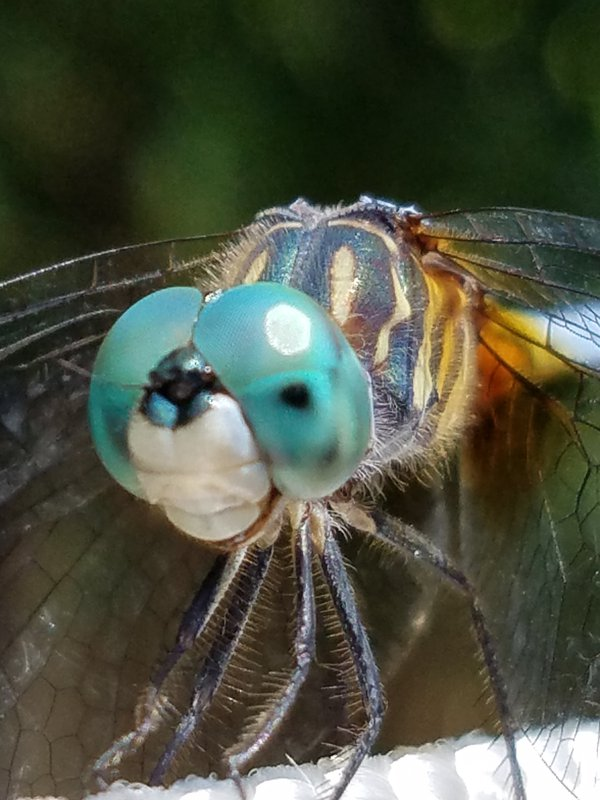 dragonfly on clothesline thumbnail