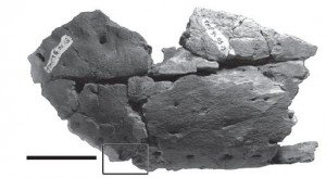 20110520083151tyrannosaur-jaw-bite-300x164.jpg