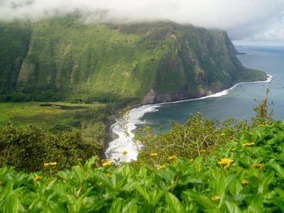 Over the last 30 years, rainfall on Hawai'i's islands has decreased by 18 percent while the number of residents has doubled since the late 1950s, leading to a high demand for an already scarce resource.