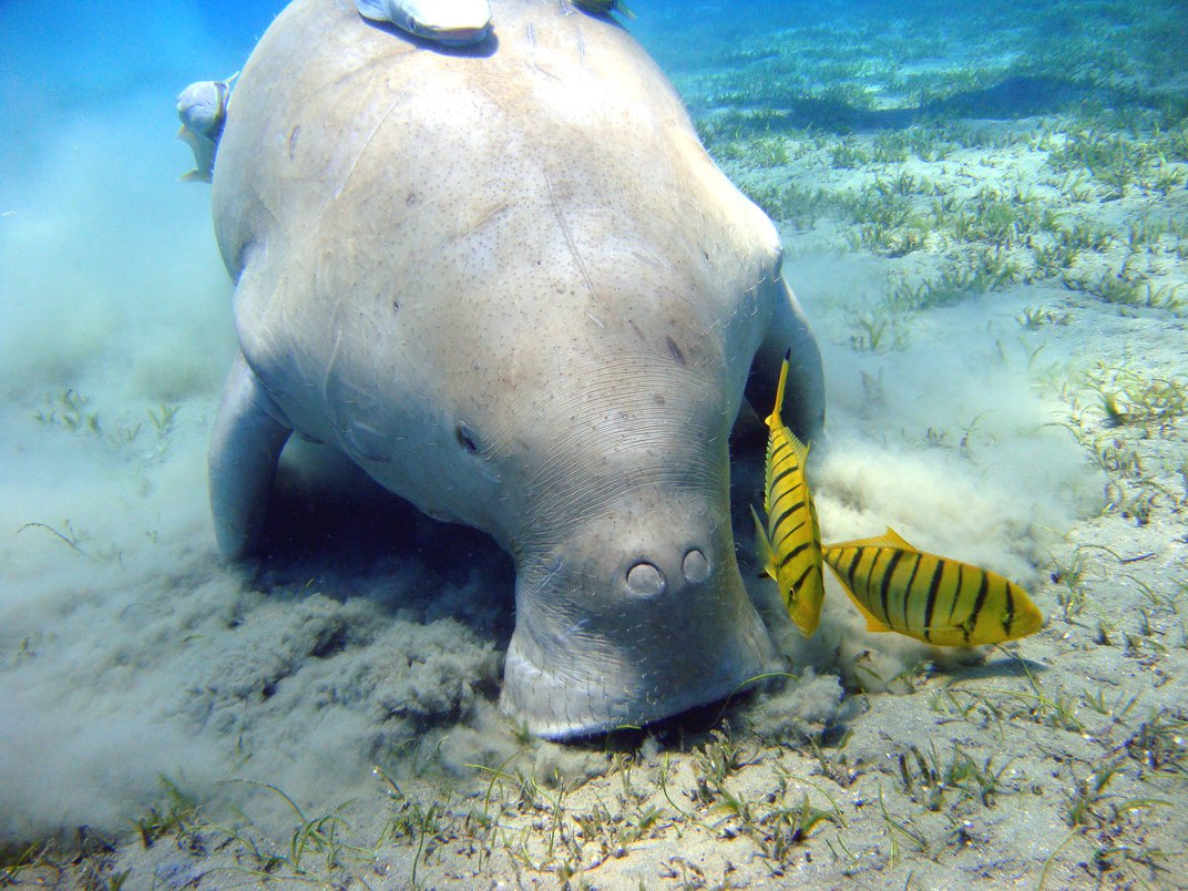14 Fun Facts About Manatees