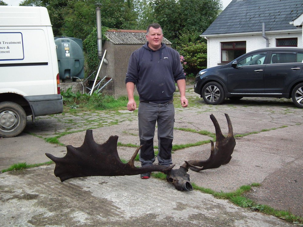 Elk Skull
