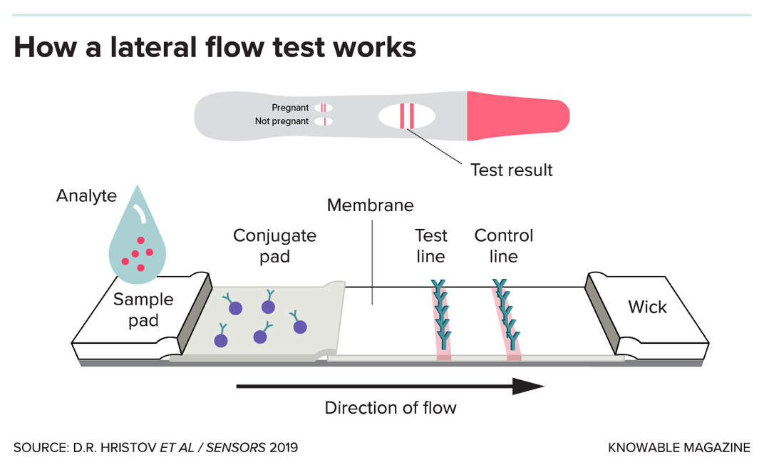 Scientists Are Racing to Develop Paper-Based Tests for Covid-19