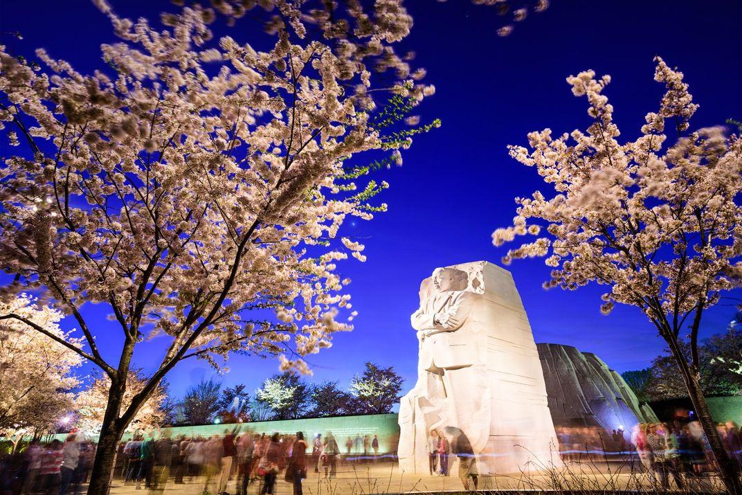 Cherry Blossom Forecast Update: When Will Washington, D.C. Reach Peak Bloom?