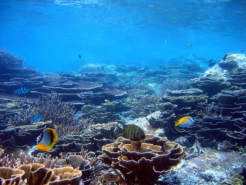 Acropora Coral Reef