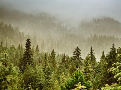 Tongass National Forest is home to stands of old growth trees that are between 300 and 1,000 years old.