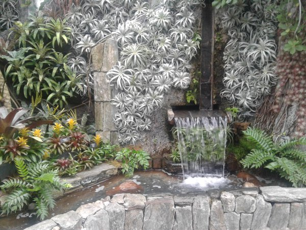 Water Plants thumbnail