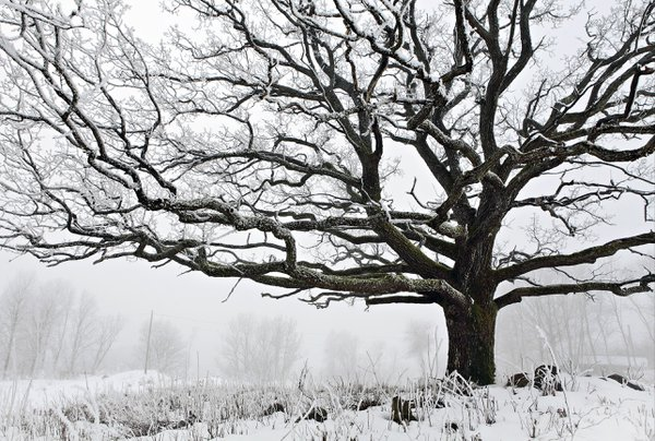 The Tree Of Life thumbnail