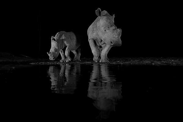 rhino thumbnail