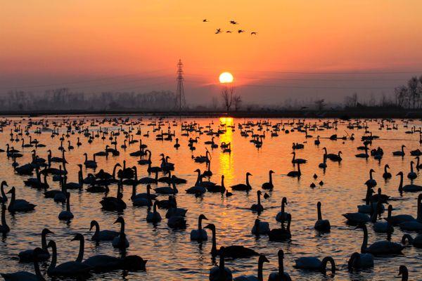 swan lake thumbnail