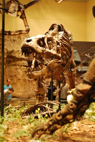 20110520083322carnegie-tyrannosaurus.jpg