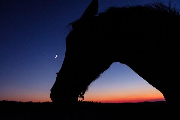 Riding until sunset thumbnail