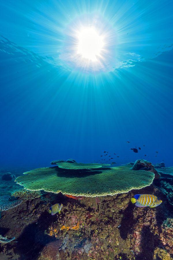 Under the sea, under the sun thumbnail